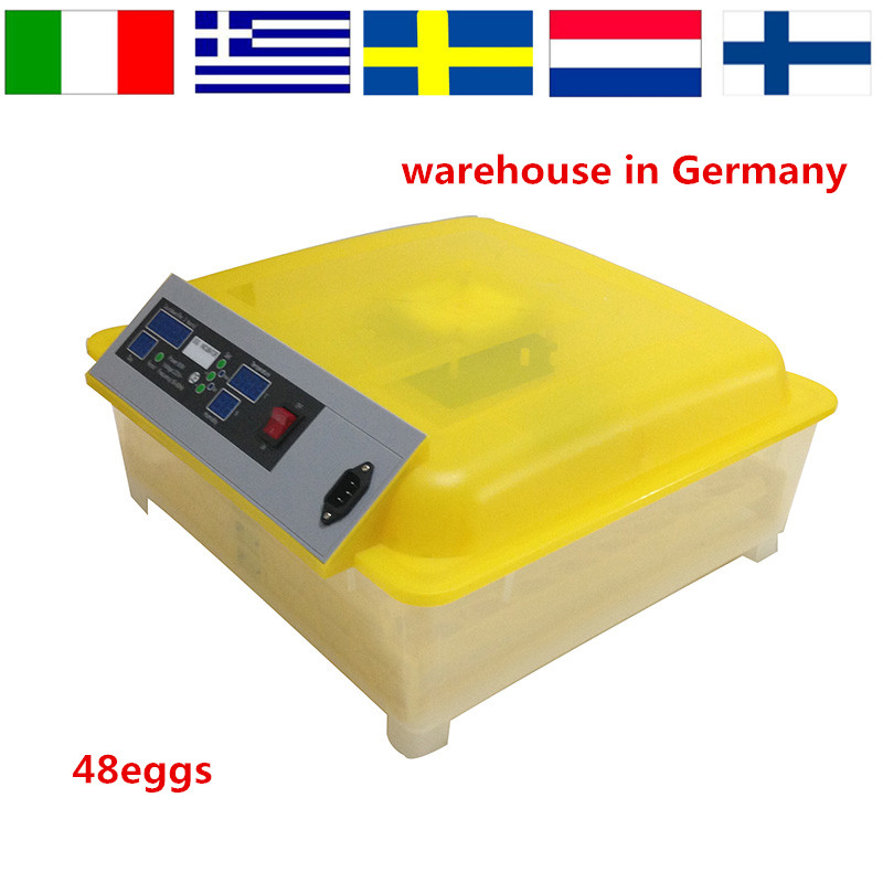 Chicken Hatching Eggs for Sale Promotion-Shop for Promotional ...