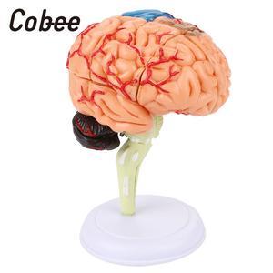 Image 2 - 学校教育モデル医療教育のモデル脳解剖モデル 4D取り外し可能な視覚科学耐久性のあるpvc教育ツール