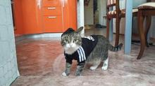 "Absolutely lovely ""Adidog"" (Adidas) sports Cat"