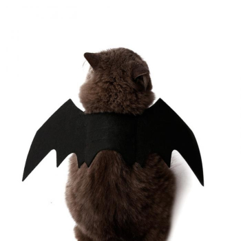 Halloween Cat Bat Costume 1