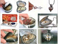 Regalo de las mujeres palabra Amor real 10 Unidades Amor Wish Pearl Necklace Set Oyster Gota Colgante