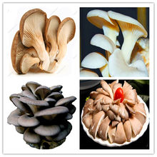 Delicious Mushrooms bonsai, 2000 Pcs Vegetable plants Rare Pleurotus Mushroom Strains Geesteranus bonsai Easy Growing DIY Garden(China)