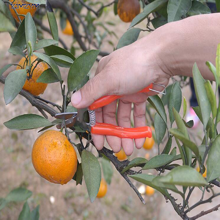 high quality stainless steel orange scissors small fruit tree pruning shear fruit scisso ...