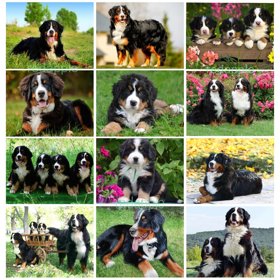 new arrival Diamond painting embroidery Puppy Bernese Mountain Dog crystal beads 5d cross stitch kits handwork animal mosaic art