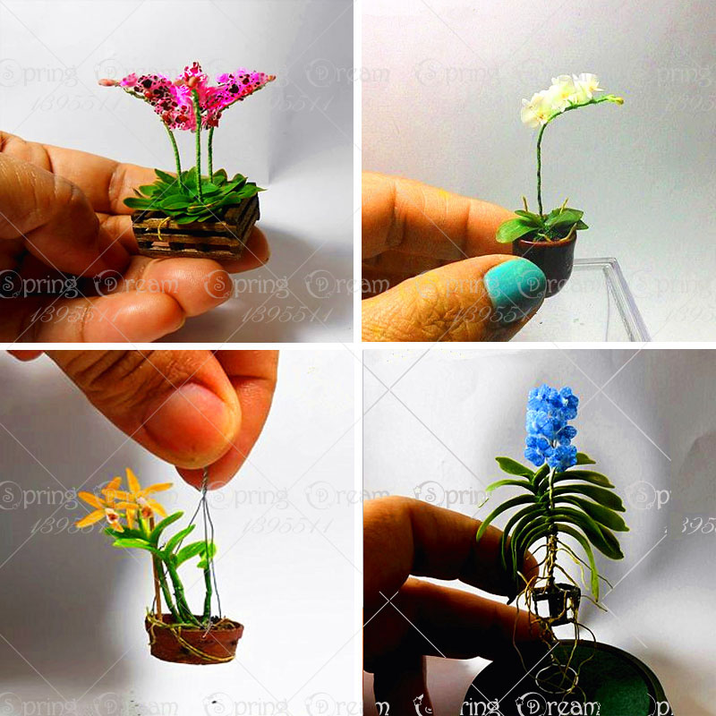 11 11 100pcs rare phalaenopsis orchid bonsai flower seeds rare bonsai flower seeds plant for home