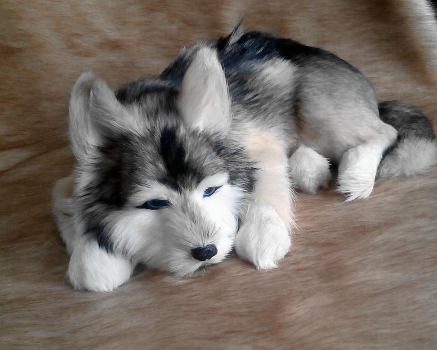 simulation cute lying husky 40x30x14cm model polyethylene furs dog model home decoration props model gift d412