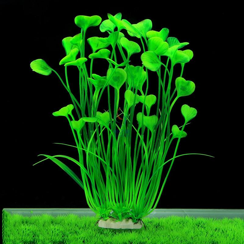приземлился, отец красивые искусственные водоросли аквариума фото ощипывают