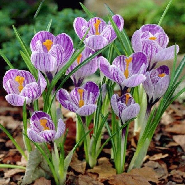 Семена цветов многолетние описание 41