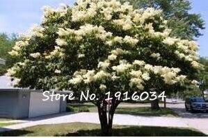 online get cheap bianco lilla fiore -aliexpress.com   alibaba group - Un Piccolo Giardino Fragrante