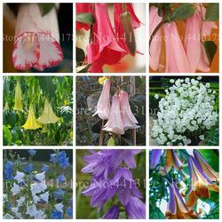 100 шт./пакет Редкие колокольчик карликовые деревья импортные Чили Rosea завод открытый и Крытый чилийский колокольчик сад для цветочный