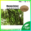 Hot sale mucuna pruriens extract l-dopa with competitive price 500g/lot