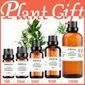 100% pure aceites de hierbas medicinales de la planta artemisia annua l aceite de hierbas aceites esenciales aceite de medicina tradicional china