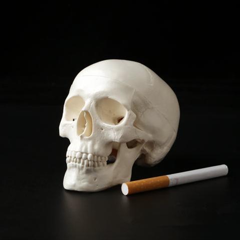 1 шт., мини-череп, анатомическая голова человека, медицинская модель, удобная, 92x99x71 мм, украшение для дома