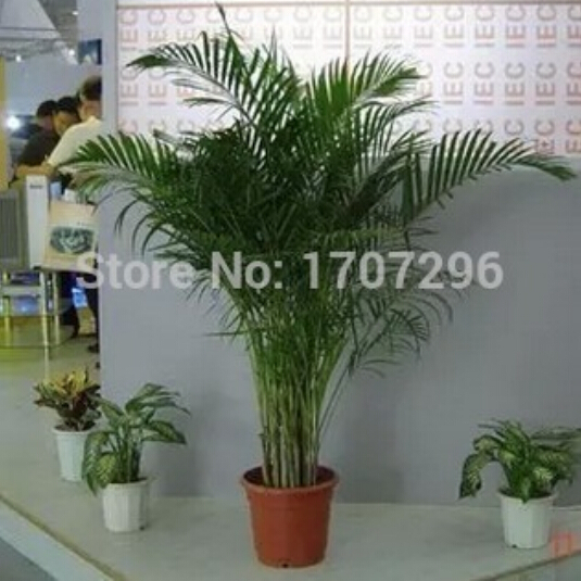 Compare Prices on Living Room Plants- Online Shopping/Buy Low ...
