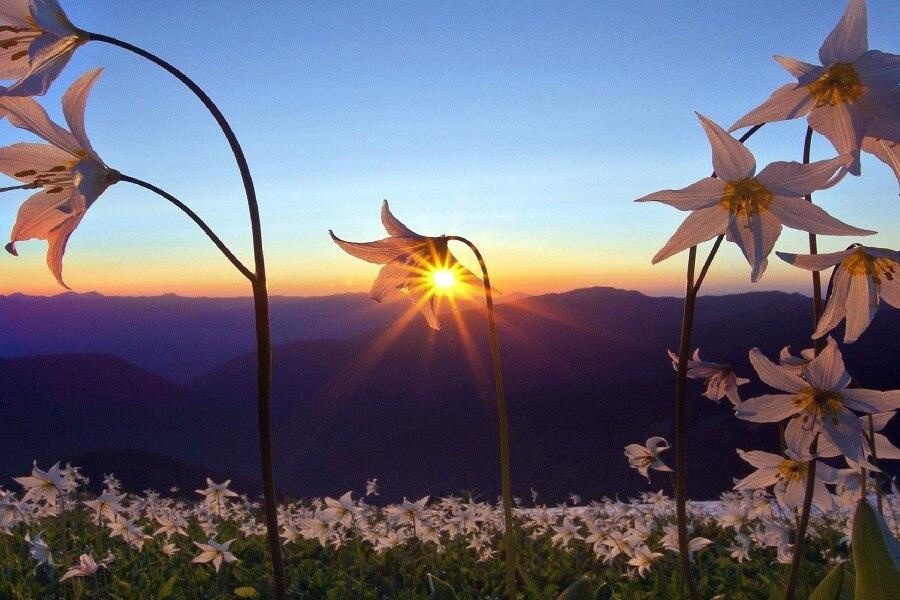 https://ae01.alicdn.com/kf/HTB1d5k6MXXXXXbmXXXXq6xXFXXXE/Flowers-font-b-Plants-b-font-font-b-Mountains-b-font-Sky-Sunrise-Sunset-Sunlight-Flower.jpg