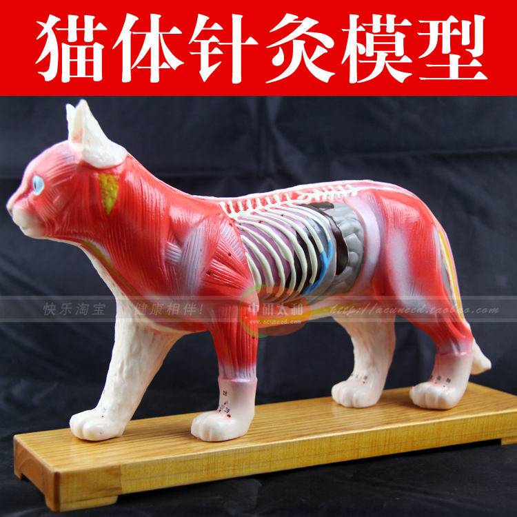 acupuncture point model animal model cat Anatomy Models cat anatomy model 12005 cmam a05 dog acupuncture model animal acupuncture models for veterinarian s reference
