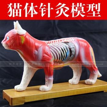 acupuncture point model animal model cat Anatomy Models cat anatomy model