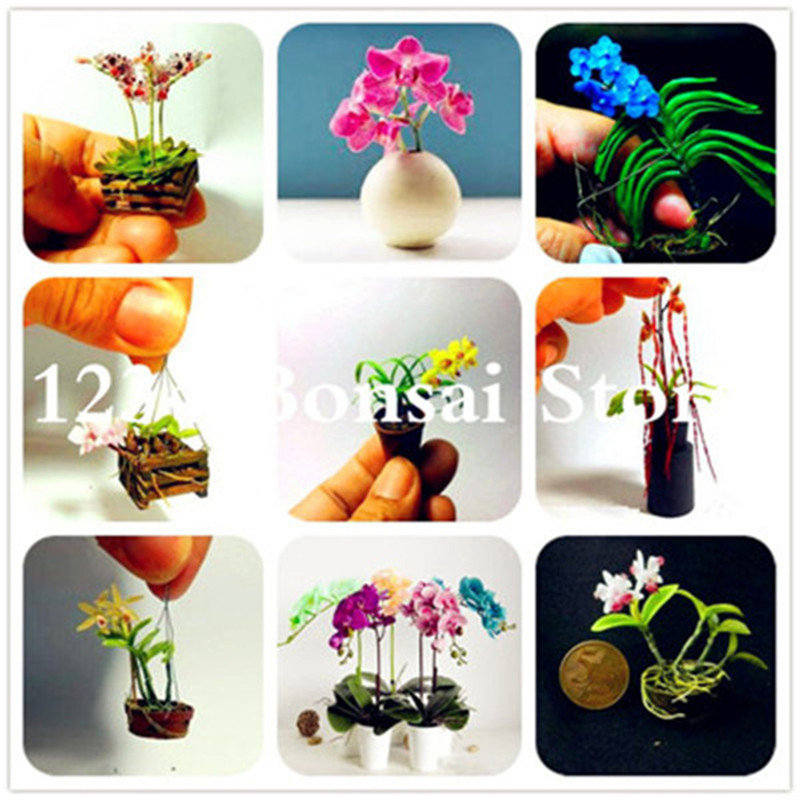 Garden Supplies Garden Pots & Planters Temperate 100pcs Mini Bonsai Orchid Bonsai Office Plant Beautiful Flowers Home Miniature Flower Garden Plants Four Seasons Free Shipping