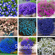 Фотография New Fresh Seeds  100 Seeds A Bag Lobelia seeds,bonsai flower seeds, Creeper, Ground Cover Chlorophytum garden landscaping
