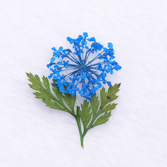 3D Nail Art Dried Flower Mixed Preserved Daisy Babysbreath Natural Sticker DIY Manicure Nail Art Decorations 12 Color/Box  CHFL
