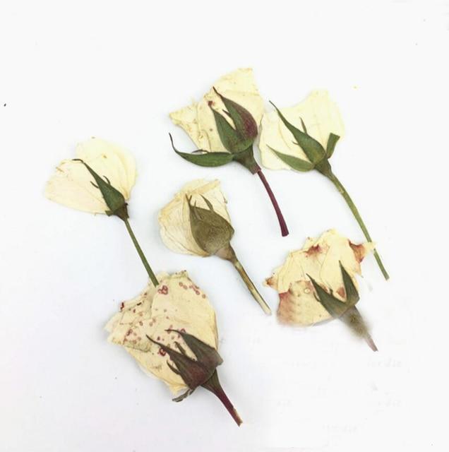 120pcs 3 5cm Dried Side Pressed White Rose Flowers Plant Herbarium ...