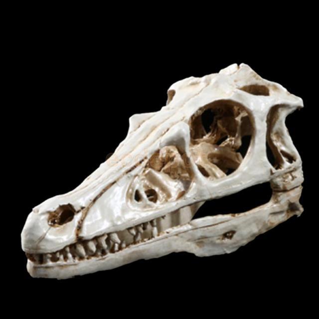 Resina de Gorila Modelo Anatomía Cráneo Cabeza Estatuilla Decoración ...