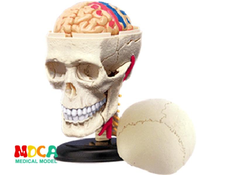 Skull 4d Master Puzzle Assembling Toy Human Body Organ Anatomical Model Medical Teaching Model