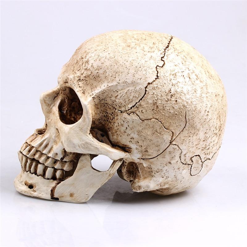 Escultura Decoração de Halloween 1:1 Crânio Animal Vida Modelo Réplica Médico Médico Modelo Resina Artesanato Decoração Da Casa de alta qualidade