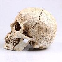 https://ae01.alicdn.com/kf/HTB1dB3dKpXXXXcLXpXXq6xXFXXX8/ประต-มากรรมตกแต-งฮาโลว-นส-ตว-Skull-ร-น-Life-Replica-Medic-แพทย-ร-น-Resin-ห.jpg