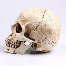 P-Flame White Head Human Skull Model Replica Medical Realistic Lifesize 1:1 Emulate Resin Crafts Skull For Decorative non toxic pvc adult skull model 1 1 three removable tooth clinic simulation skulls cranium medical college decorative figurines