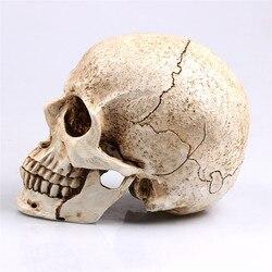 Sculpture Halloween Decoration 1:1 Animal Skull Model Life Replica Medic Medical Model Resin Crafts Home Decoration high quality