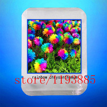 200 DAISY SEEDS Rainbow Chrysanthemum Flower rare outdoor flower for  DIY Home Garden flower plant