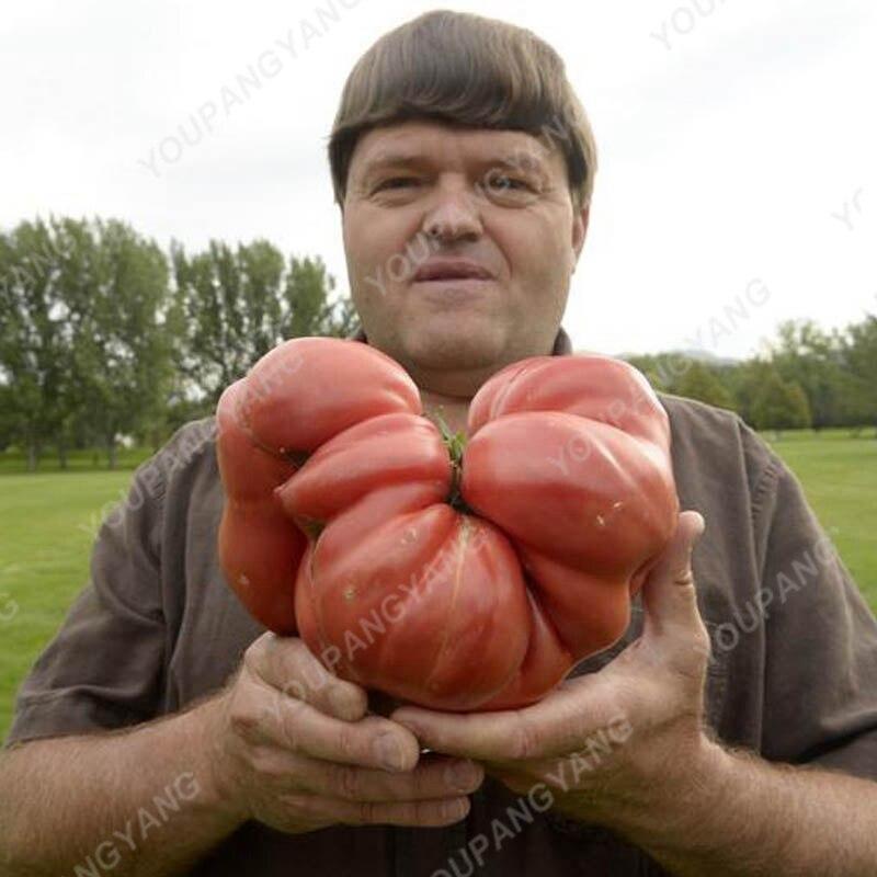 200 шт. Фамильные гигантского монстра томат бонсай из натуральной свежий бонсай очень Редкие овощи Бонсай для дома садовое насаждение Беспла...