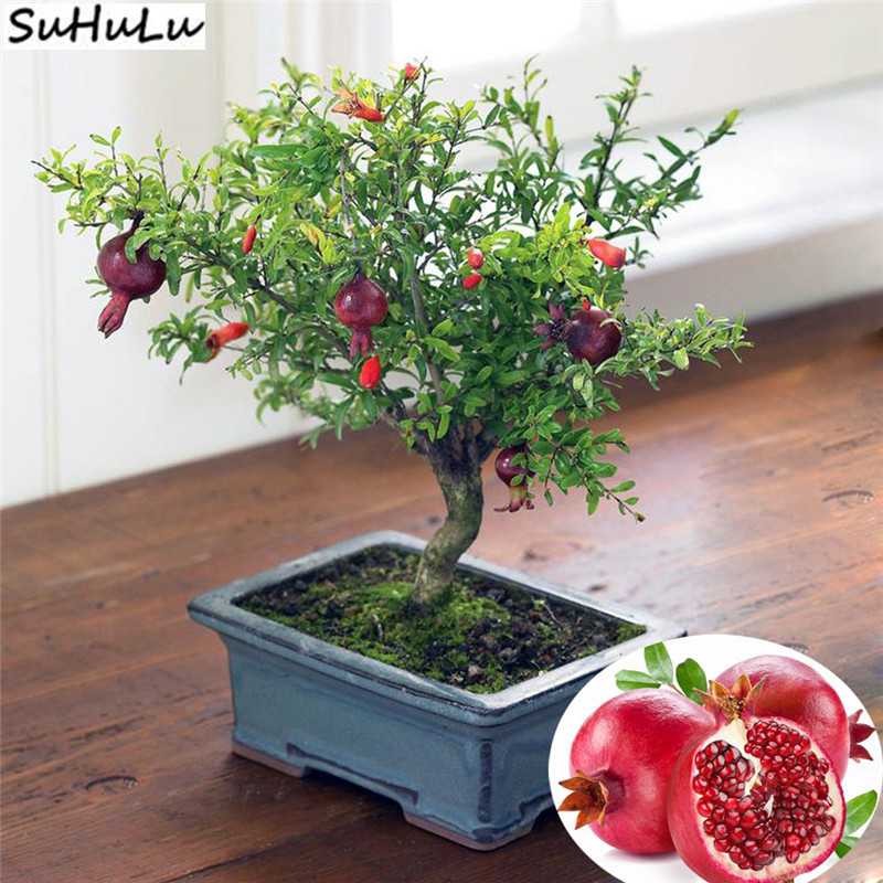 SALE ! 20 Pcs Pomegranate Rare Red Fruit Bonsai Plant For Home Garden, Juicy Perennial Frutas Tree Beautiful Flowers Best Gift