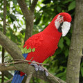 Amigurumi Red-and-Green Macaw/Parrot   baby shower   house room decrotive, gift for freind,photo use