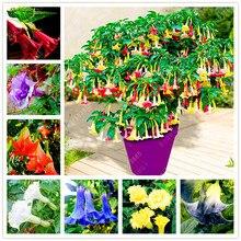 100pcs Mandala Brugmansia Datura Rare Flower Potted Plants Mixed Color Garden Decoration Bonsai Plant
