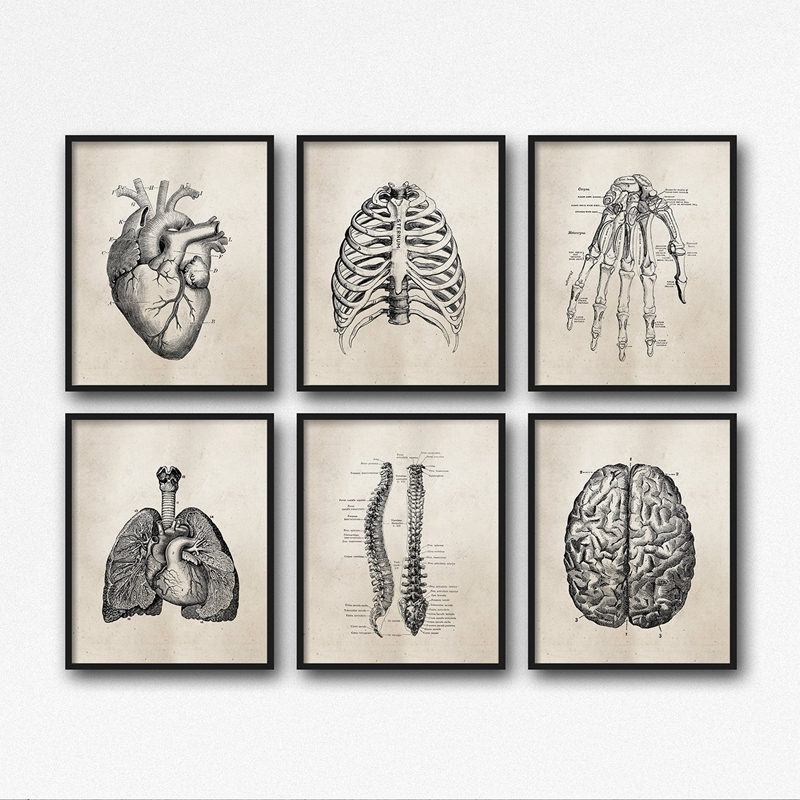 HTB1dFQKX5YrK1Rjy0Fdq6ACvVXas Human Anatomy Science Vintage Posters Art Prints , Medical Anatomy Canvas Painting Medical Doctor Clinic Wall Pictures Decor