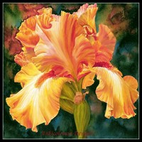 Needlework Craft Full Embroidery DIY DMC Quality Counted Cross Stitch Kit 14 Ct Oil Painting Iris
