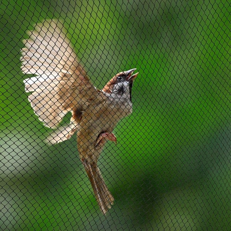 Anti Bird Preventing Crop Netting Mesh Garden Fruit Plant Tree Protection 30Mx5M
