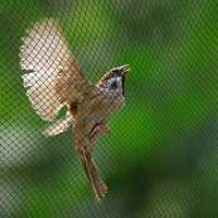 Anti oiseau empêchant la récolte filet maille jardin Fruit plante arbre Protection 30M x 5M