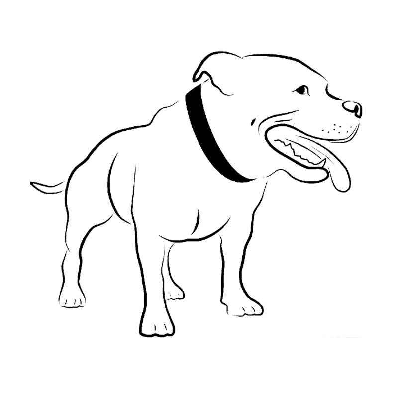 Car 214-Bullterrier à bord chien dog Autocollant des Autocollants De Voiture Sticker
