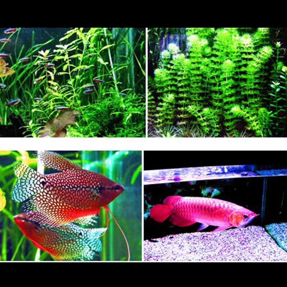 Cheap aquarium fish tanks uk - Aliexpress Com Buy Aquarium Fish Tank Smd Led Light Lamp 11w 50cm White Blue 2 Mode Extendable Uk Power Plug From Reliable Light Bulb Plug Suppliers On
