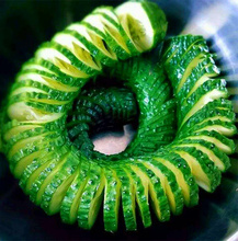 100 cucumber seeds True ORZEL extremely early Polish variety for open soil growing seeds vegetables for home garden