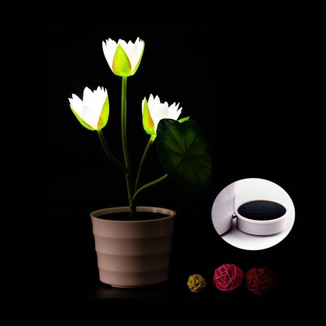 lampe solaire plante