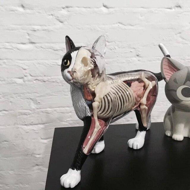 3D montado gato anatomía gato eudcational juguete modelo 28 piezas ...