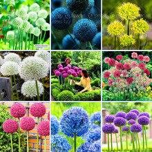 100 Purple Giant Allium Giganteum Beautiful Flower Seeds Garden Plant the budding rate 95 rare flower