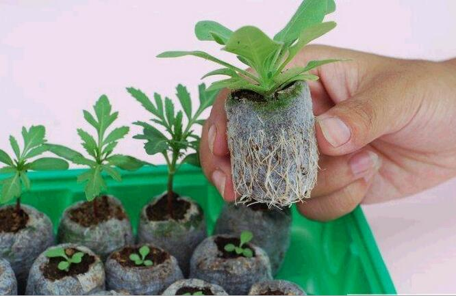Free shipping,120pcs,30mm Jiffy Peat Pellets Seed Starting Plugs Starter Pallet Seedling Soil Block Professional Easy To Use