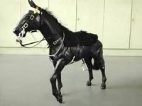 Британская королевская кавалерия черный 1/6 sSoldiers конные модели