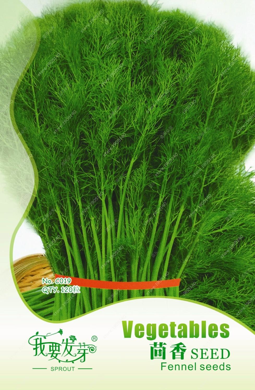 фенхель  растения
