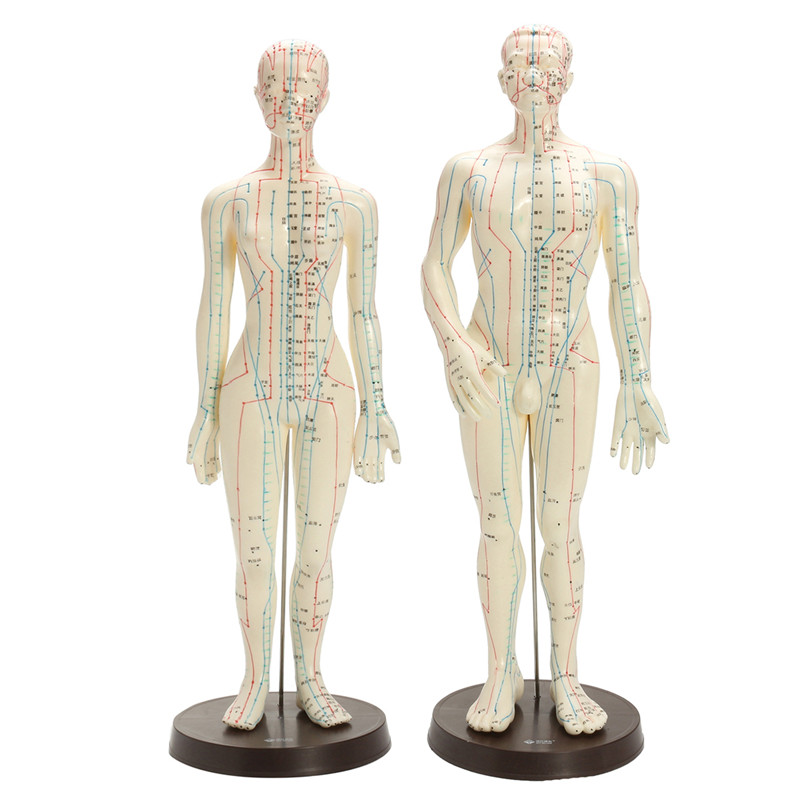 Human Body Acupuncture Model Male Female Moxibustion Meridians Acupoint Points Model With Base Medical Education Appliances hd hard 60 cm male human acupuncture acupoint model muscle anatomy human body acupuncture point model human acupoints model